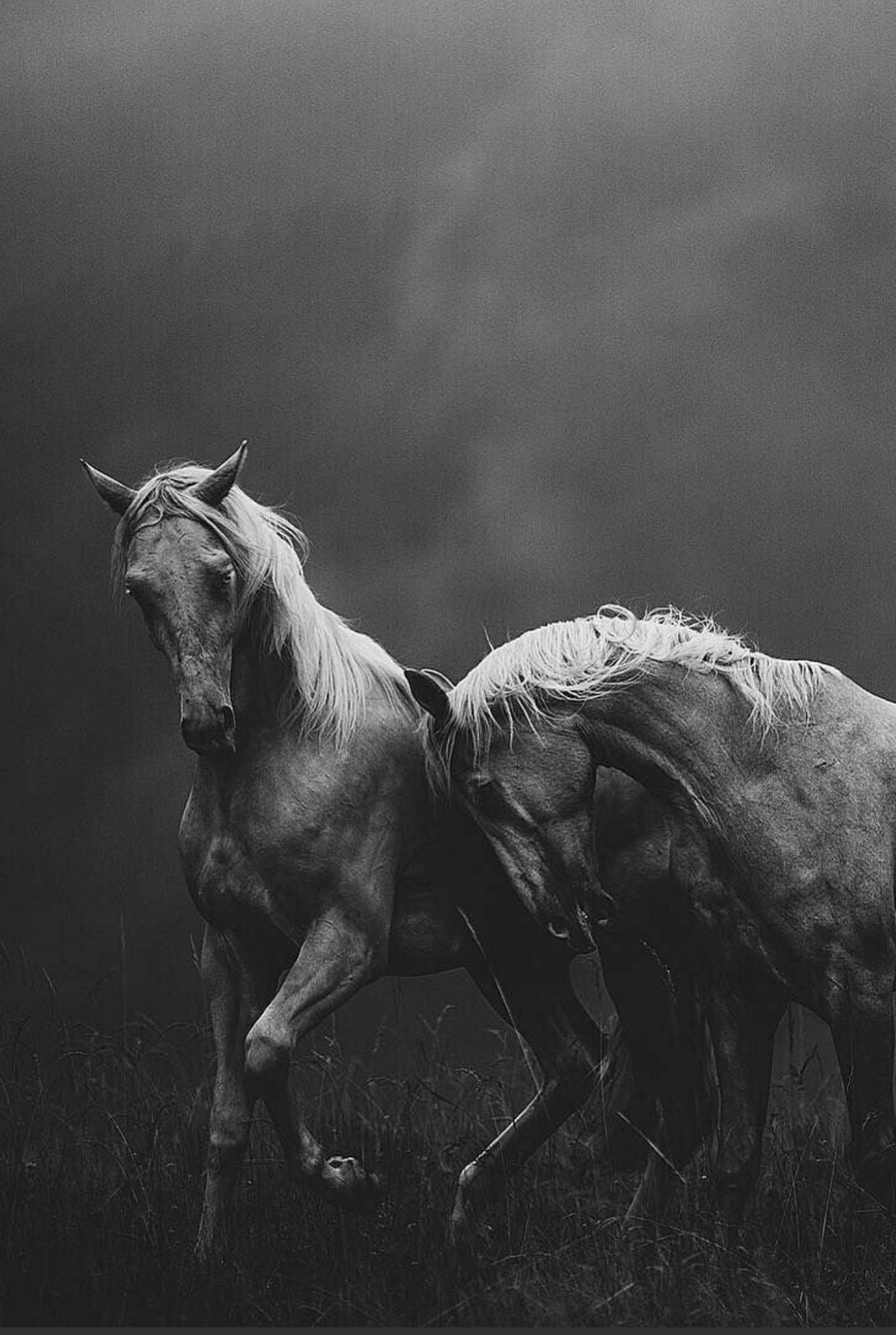 و إن ج ندن ا ل ه م الغ ال ب ون Horse Wallpaper White Horses Beautiful Horses