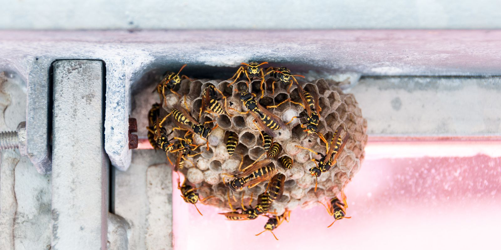 How to Get Rid of Insects and Pests Insects, Insect pest