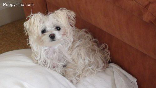 Taffy prior pup