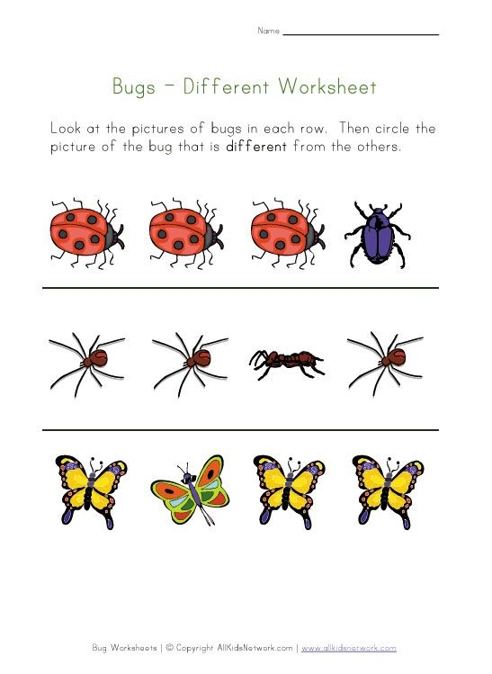 Bugs Different Printable Preschool Bugs Insects