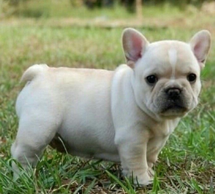 The dog id get my baby♥
