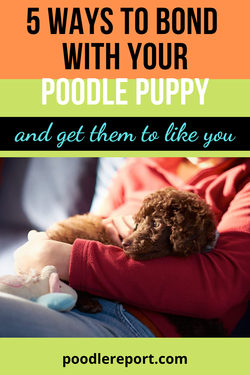 Poodles are smart and intelligent kind of dogs. How to make bond with your poodle puppy and get them to like you? Here is the complete guide #poodlepuppy#poodlecare#poodlefacts