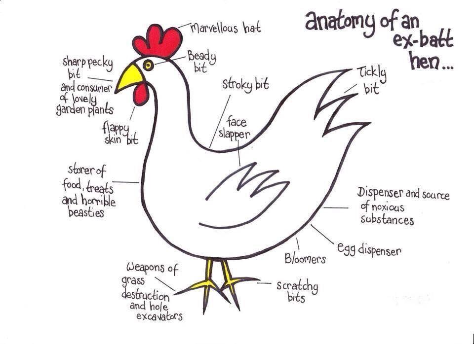Anatomy of an Ex-Batt Hen | Chickens As Pets | Pinterest | Hens and ...
