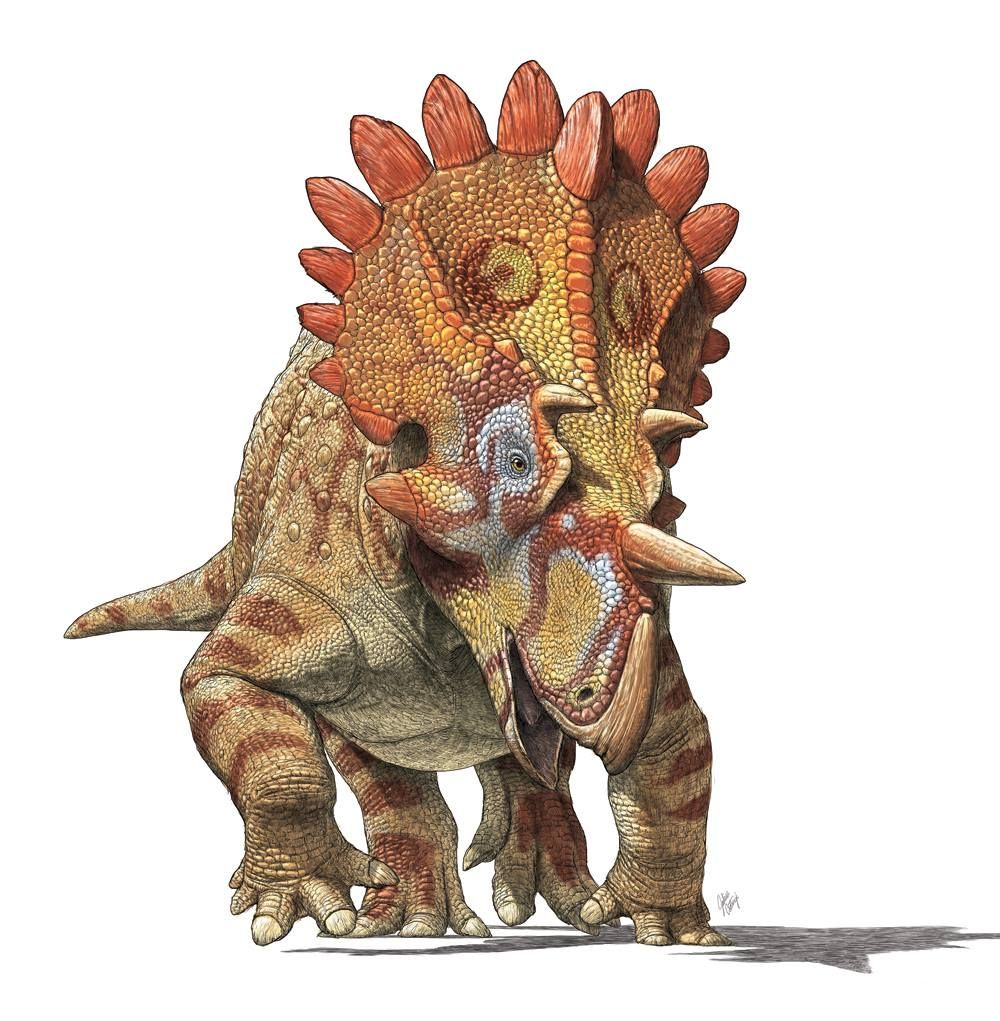 "Julius Csotonyi | Regaliceratops peterhewsi (a.k.a. ""Hellboy"")"
