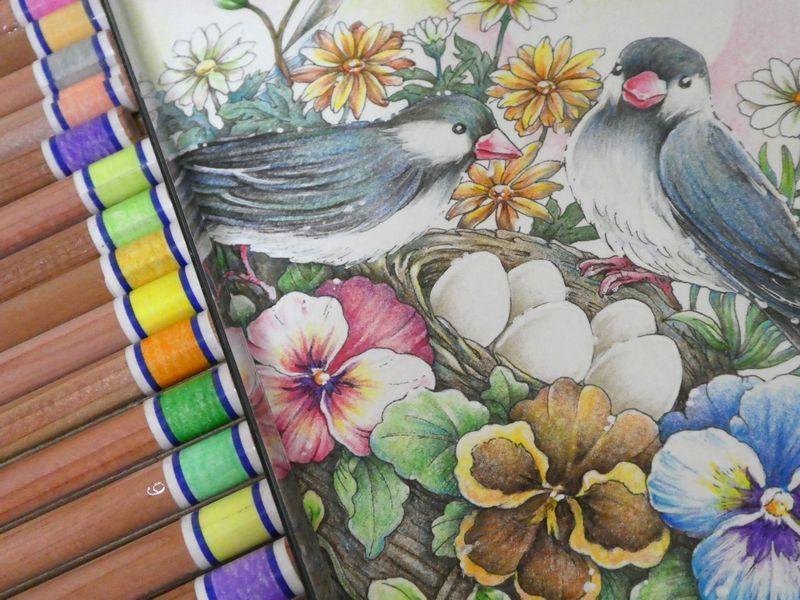後編 無印良品色鉛筆で小鳥と花カゴページメイキングです 花日和花だよりより 塗り絵日記 色鉛筆 塗り絵 大人の塗り絵