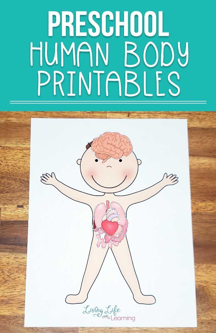 Preschool Human Body Printables   Body preschool ...