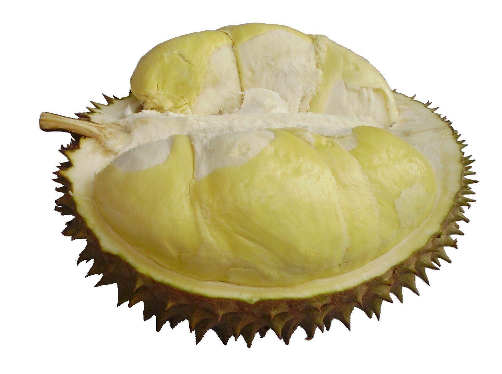 Durian Un Fruit Controverse Sur Certaines Compagnies Aeriennes Le Transport De Ce Fruit En Cabine Est Strictement Interdit Du Fait Du Par Buah Makanan Kacang