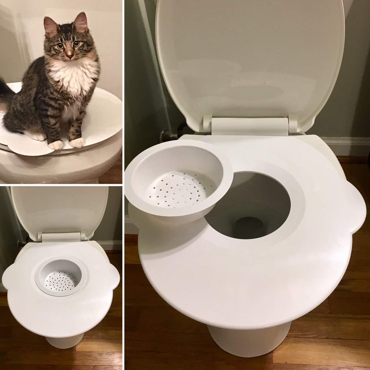 Kitty S Loo The Best Cat Toilet Seat Cat Toilet Training Kit
