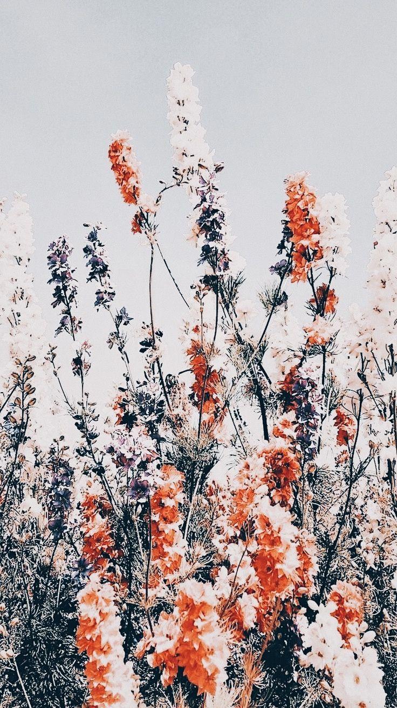 𝓟𝓲𝓷𝓽𝓮𝓻𝓮𝓼𝓽 ♡𝓫𝓻𝓲𝓽𝔁𝓻𝓪𝓶𝓲𝓻𝓮𝔃♡   Flower phone ...