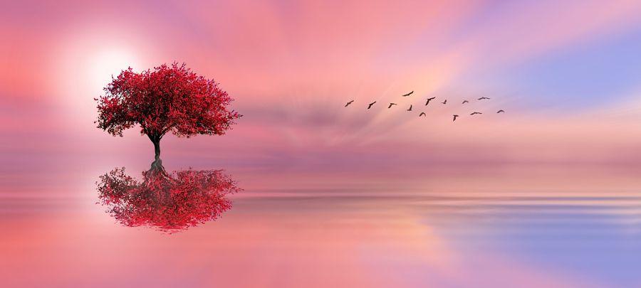 LONE TREE by Nasser Osman - Photo 141382851 - 500px