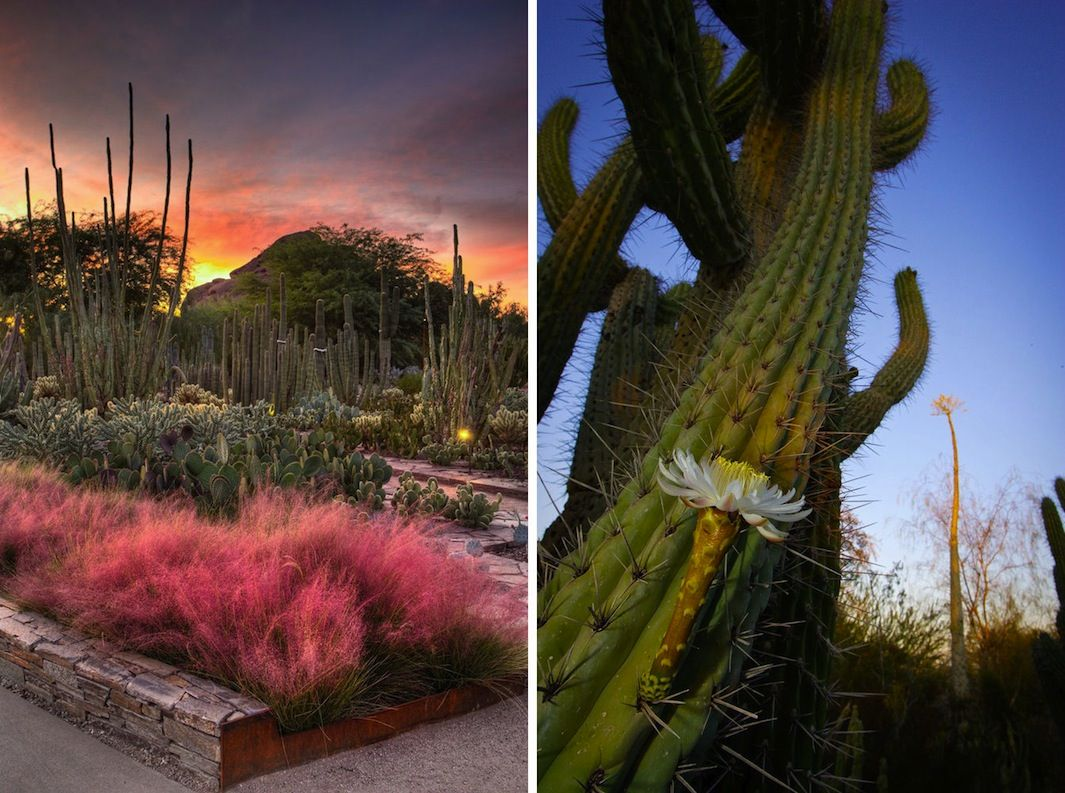 The Most Well-Designed Gardens in the World | Reflection, Gardens ...