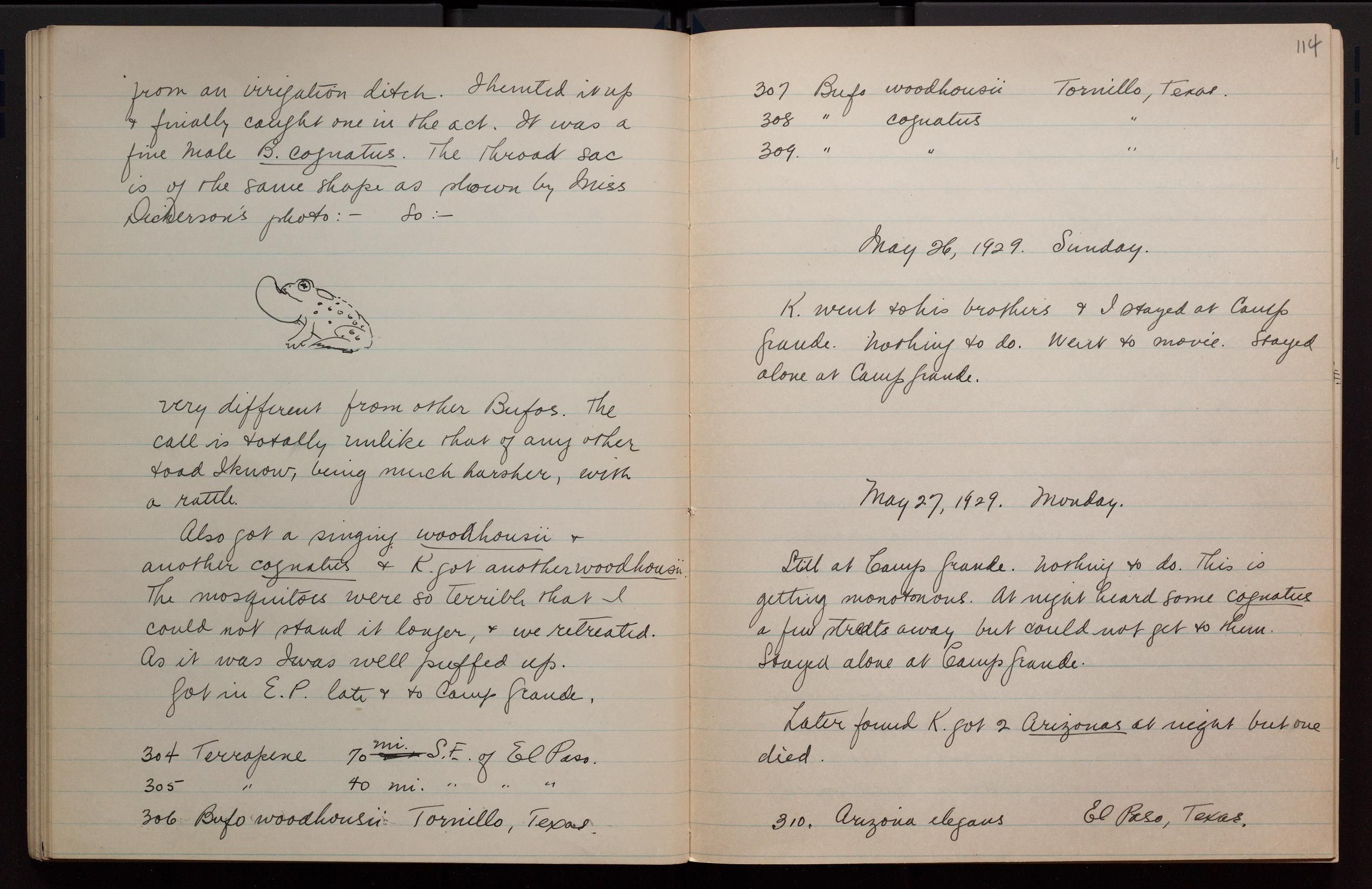 Journal - Collecting Trip to Texas and Arizona,...