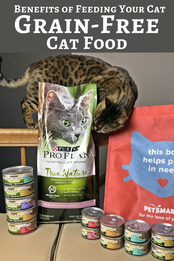 Discover the benefits of feeding your cat a grainfree cat