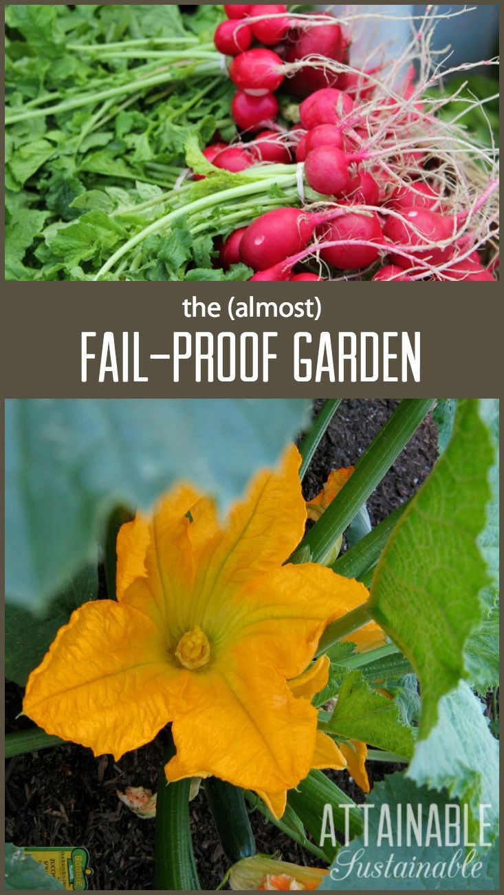 Choose these crops for success in the ve able garden Great for first time gardeners of course but most everyone can appreciate the fail proof nature of