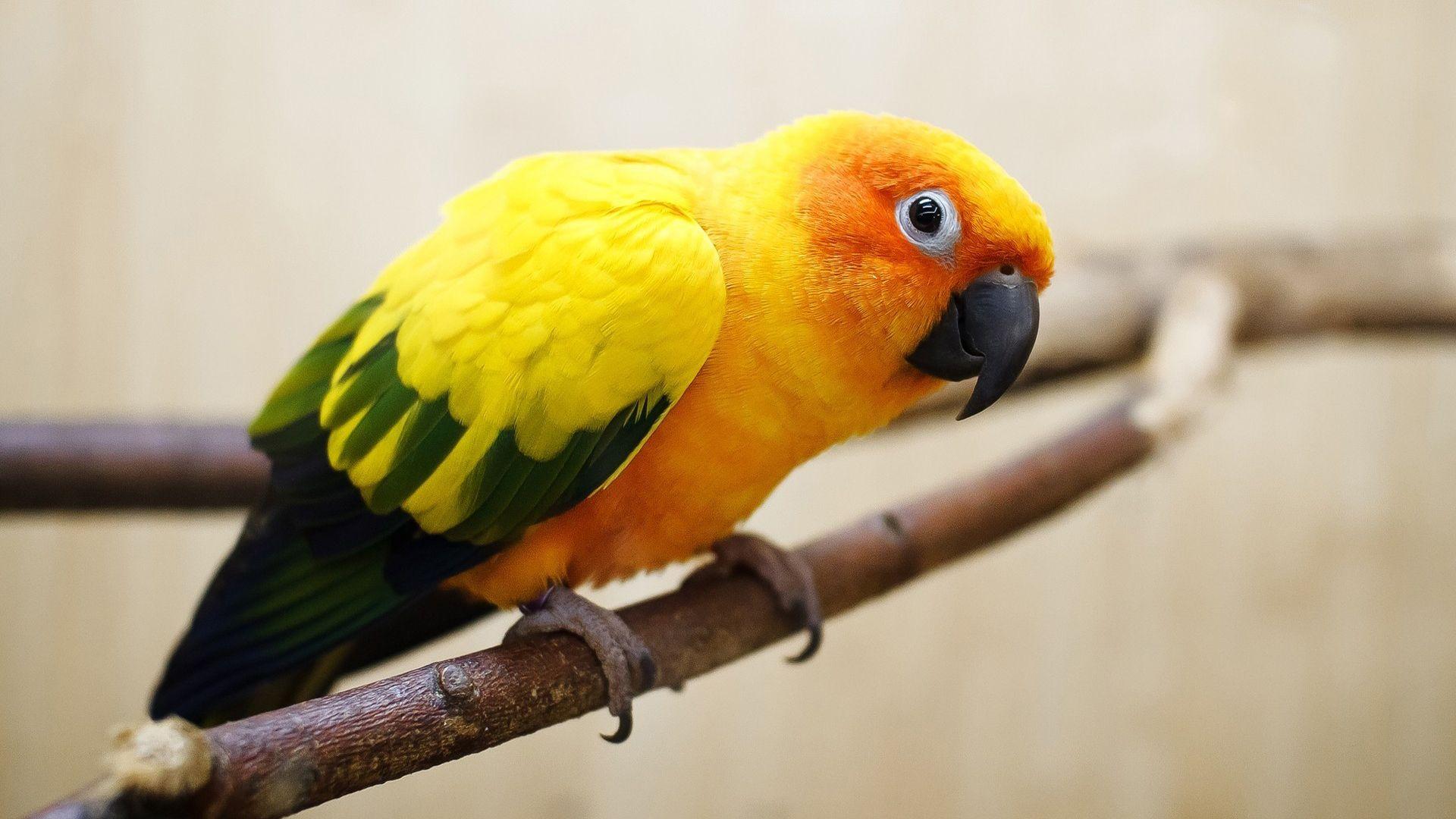 City Parrotss favorites   Parrot, Parrot image, Pet birds