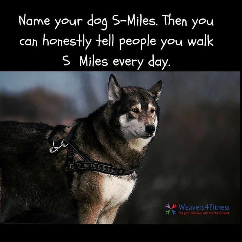 """Do you walk """"5 Miles"""" every day? #fitnessfunny #funnypic #dogwalking #lol #funnyquote"""