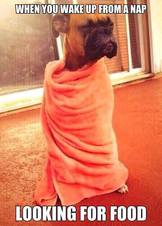 Sleepy Dog Food Towel Nap Best Funny Pictures Funny Meme Pictures Funny Pictures Laugh