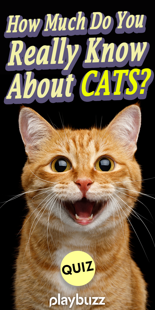 How Much Do You Really Know About Cats Animal Quiz Cats Cat With Blue Eyes