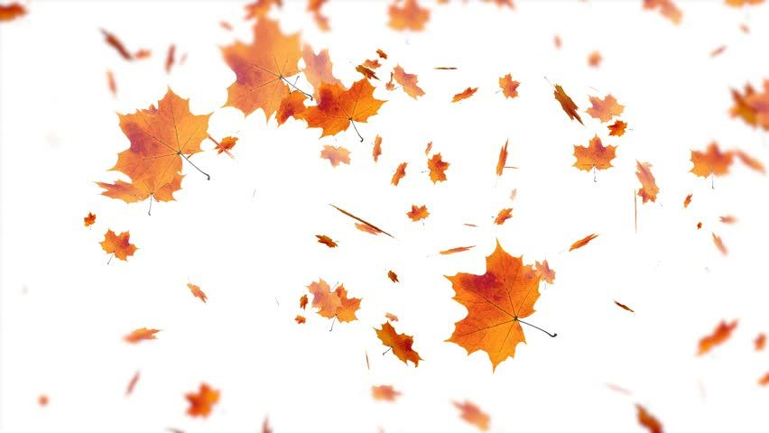 Ad: Falling autumn leaves . . | Shutterstock Footage | Keywords: abstract, autumn, background, beautiful, blur, border, bright, brown, closeup, color, colorful, concept, decoration, design, dry, environment, fall, flora, foliage, forest, frame, golden, green, group, illustration, isolated, leaf, leaves, maple, natural, nature, october, orange, outdoors, pattern, plant, red, season, seasonal, september, sun, texture, tree, vector, vibrant, wallpaper, white, yellow #autumnleavesfalling