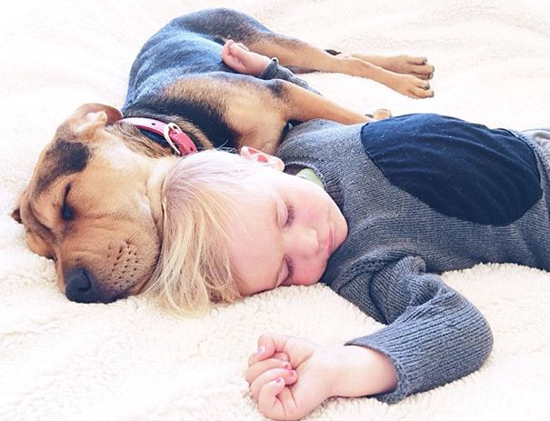 You Have To Click And Look At Them All Too Adorbs Toddlernaps - Toddler naps with puppy