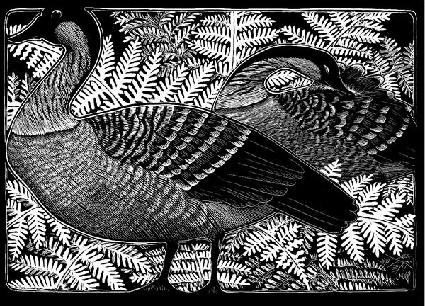 "'NENE"" Women Artists of Kaua'i: Michelle Dick. Michelle Dick, scratchboard artist, Kauai"