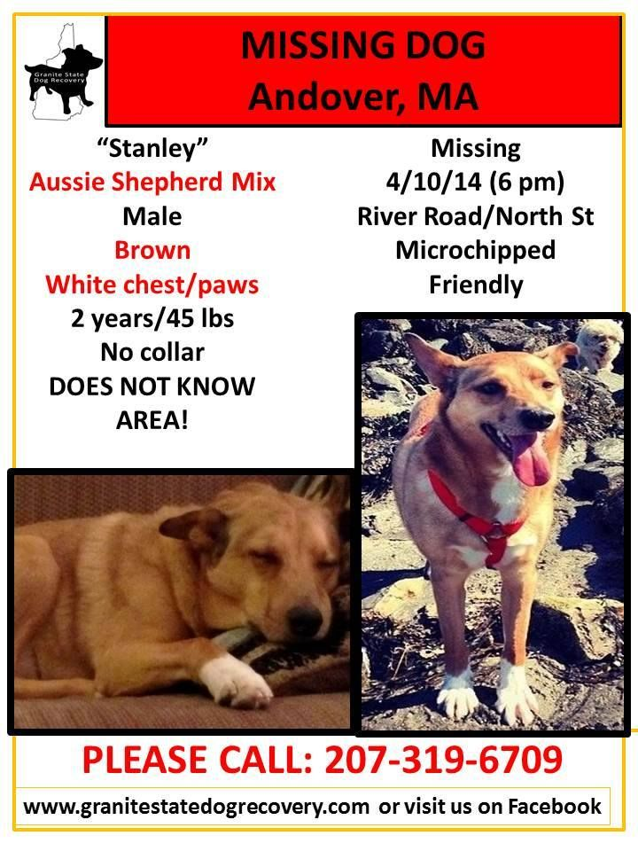 5/9/14 - POSSIBLE SIGHTING OVERNIGHT IN LAWRENCE. Near the intersection of Salem st and Union St. Please keep your eyes open in the area.  4/25/14 Need some help with flyers! Any side streets off North st. chandler, river rd and 133 would be helpful. Also you reach out on Stanley's FB page: https://www.facebook.com/groups/696716780369604/
