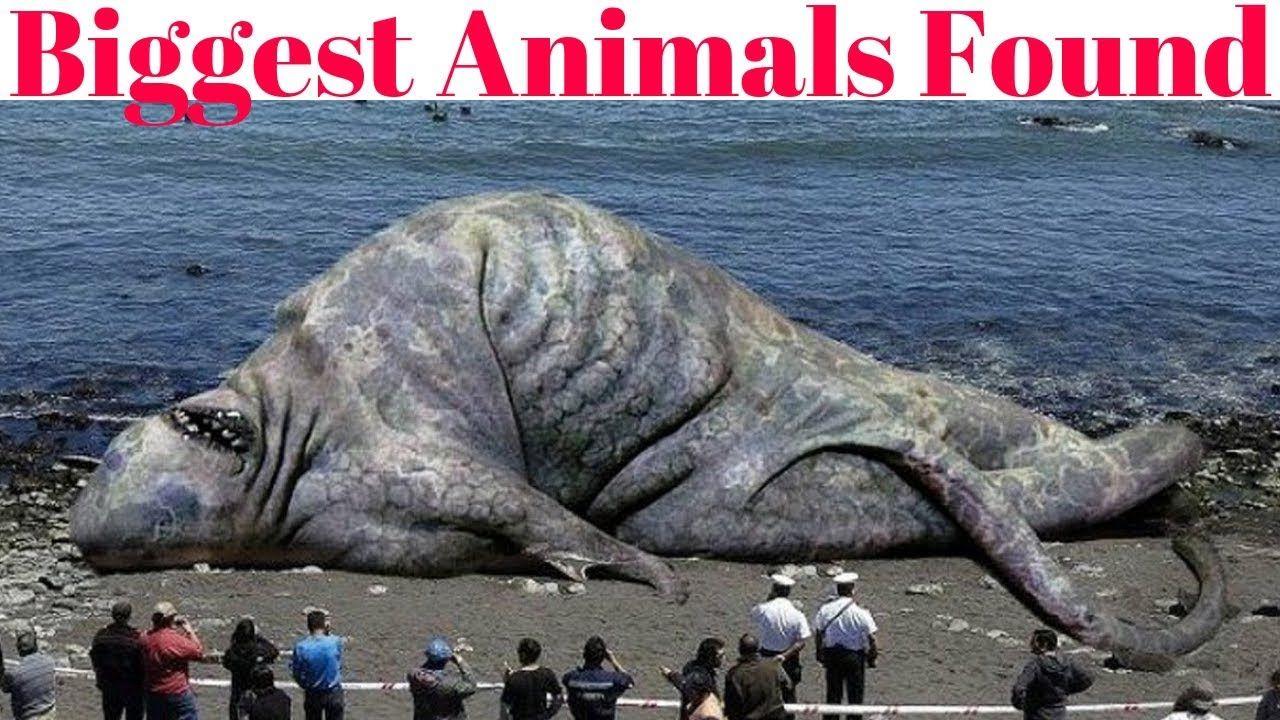 Top 10 Largest Animals In The World Big animals, Animals