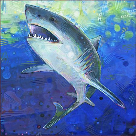 Great White Shark Jaws Great White Shark Un Grand Requin Blanc