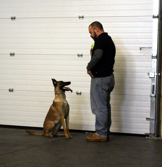 Motivated K9 In Concord Nh Offers Dog Training From Basic And
