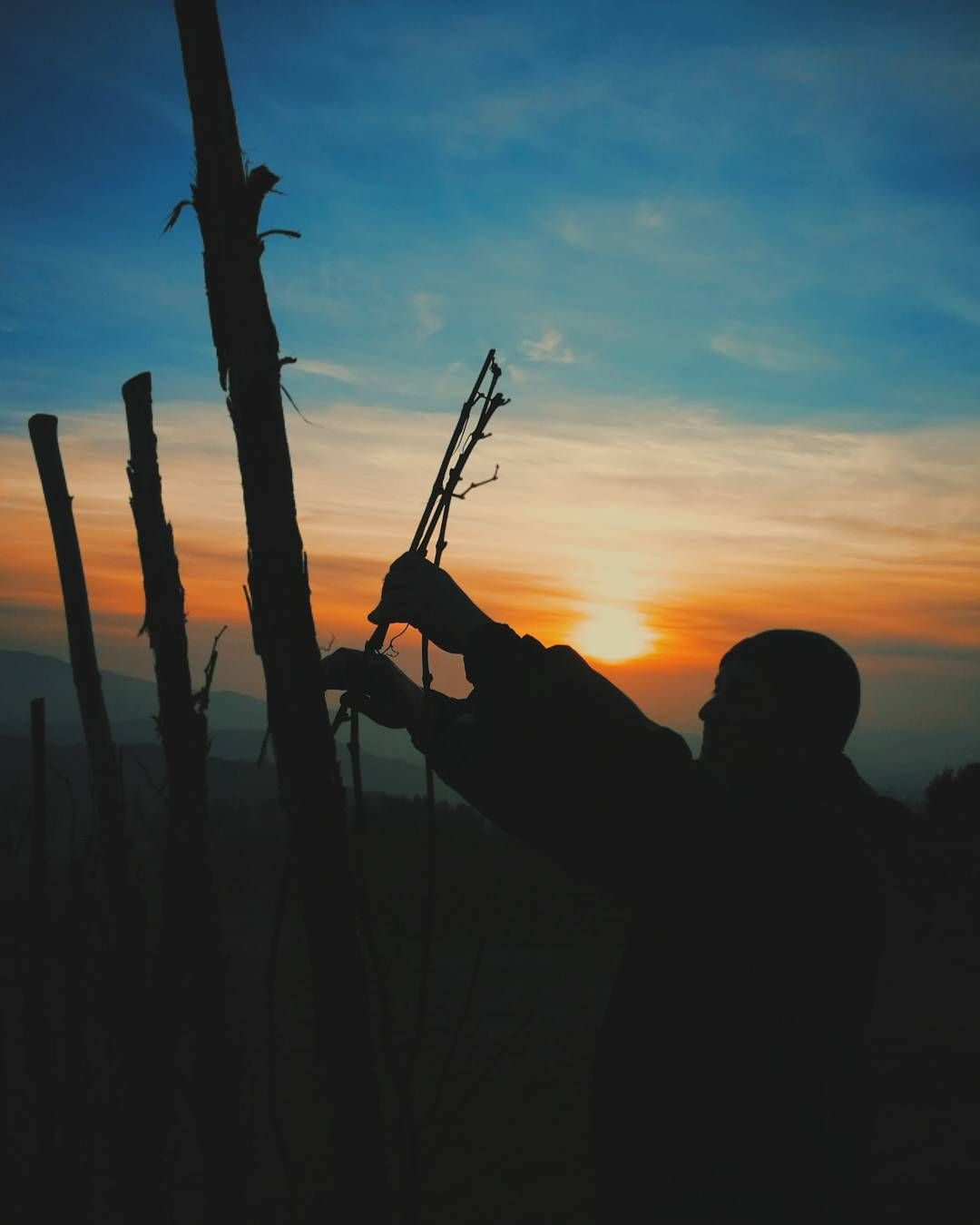 Pruning the merlot with a magic sunset behind. It happens just in Pomaio.  #thinkgreendrinkred #poderedipomaio