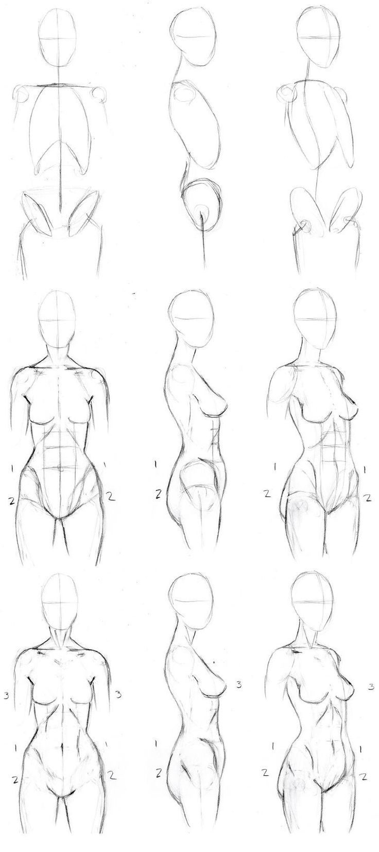 Step 1: Skeleton Sketch your basic structure outline. For the torso we will of course need the vertebrae, ribcage and pelvis. Don't worry about sketching these the -exact- shape of the actual bones...