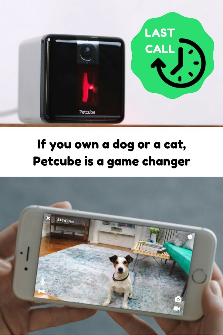 Home Security Camera That Lets You Comfort Play And Treat Your Pet From Your Phone Pets Petcube Pet Camera