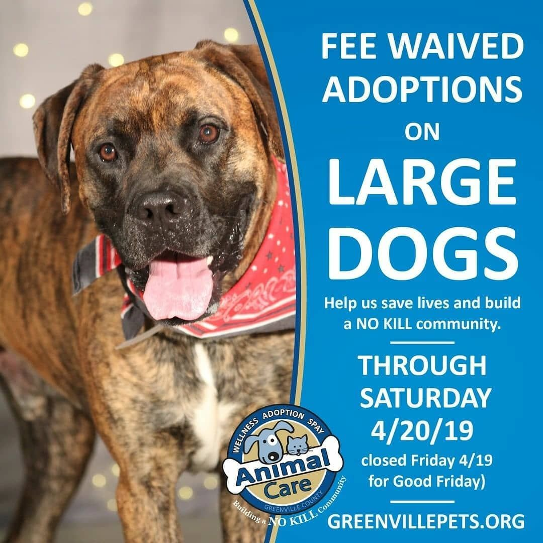 Repost Gvlanimalcare Help Us Save Lives And Adopt A Large Dog