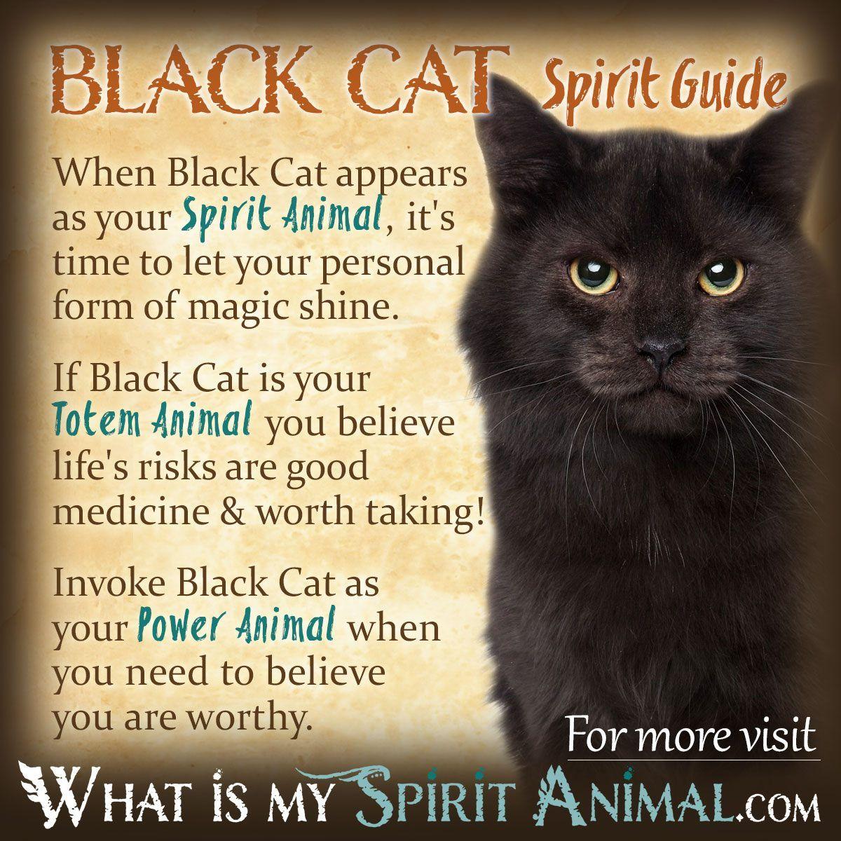 Black Cat Symbolism & Meaning Cat spirit animal, Cat