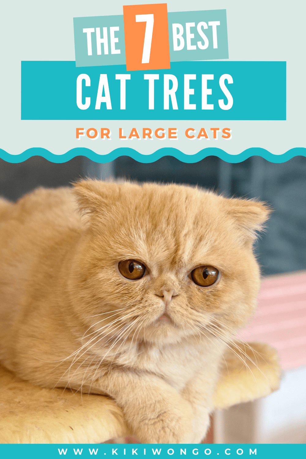 Best Cat Trees For Large Cats That Love To Climb In 2020 Cool