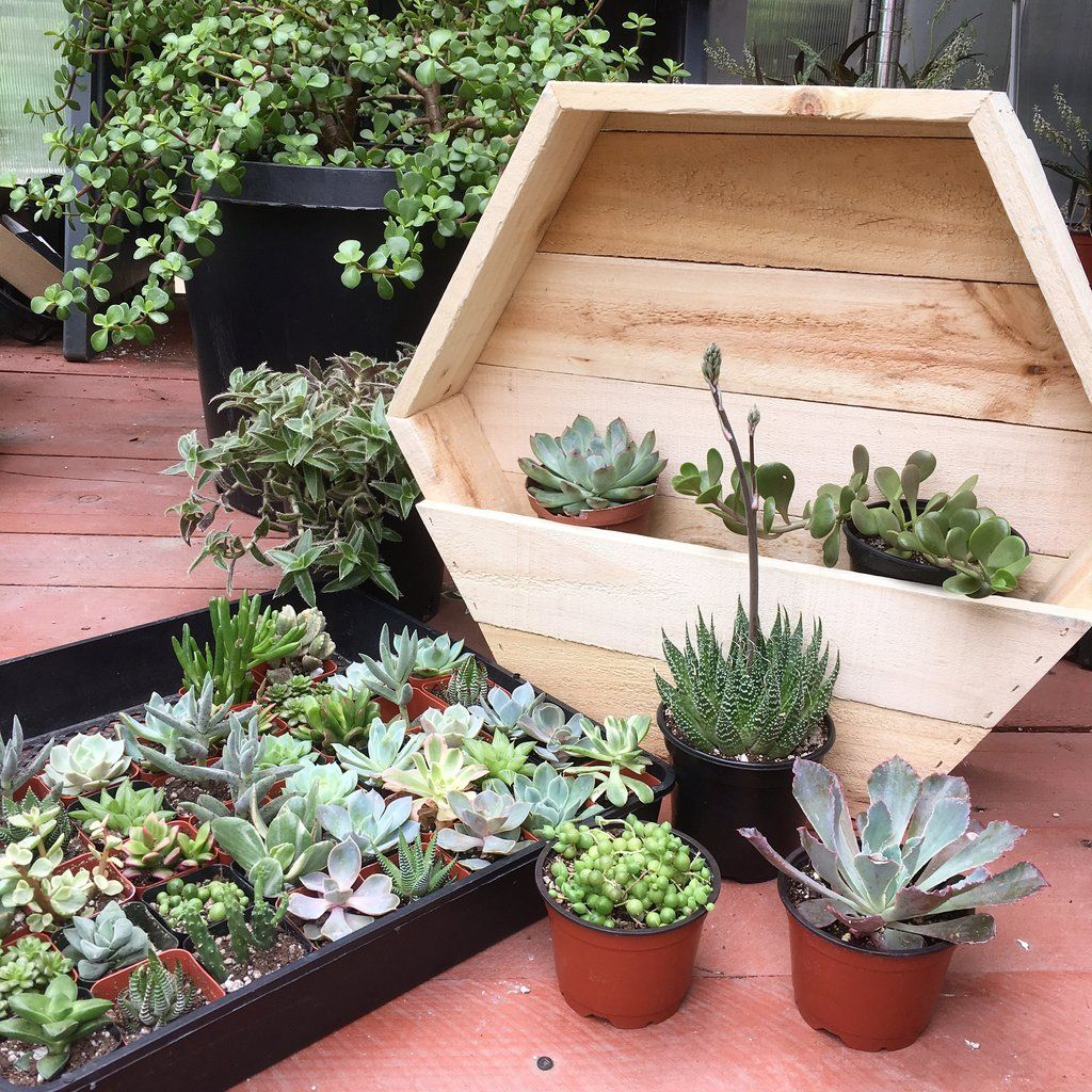 10qty Large Hexagon Shaped Succulent Planter Group Workshop For 10 People Succulent Planter Wooden Succulent Planter Diy Garden Seating