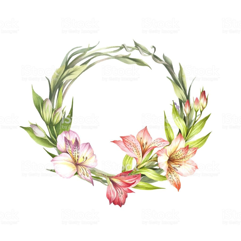 Frame With Alstroemeria Hand Draw Watercolor Illustration Flower Drawing Watercolor Illustration Floral Drawing