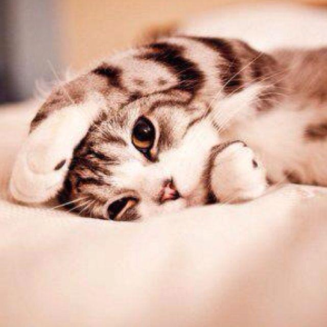 Cutest kitten ever