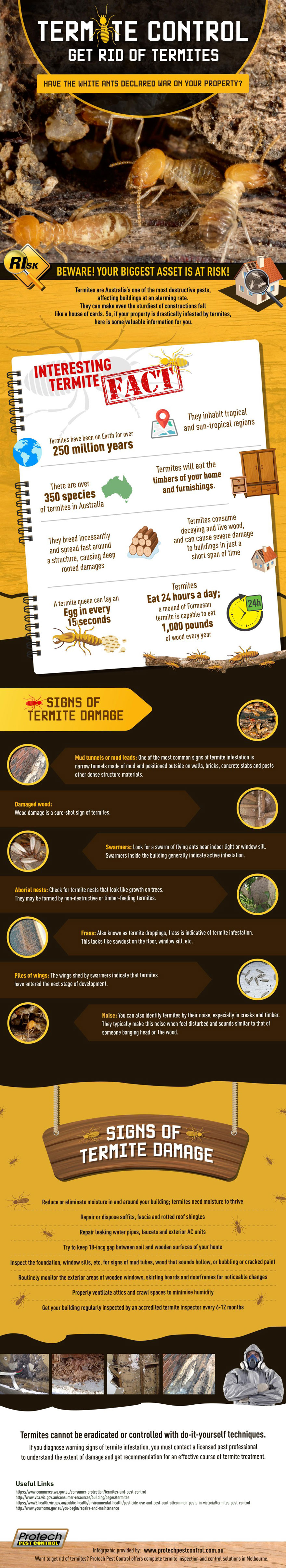 Termite Control: How to get rid of termites #Infographic #Animal #Termite