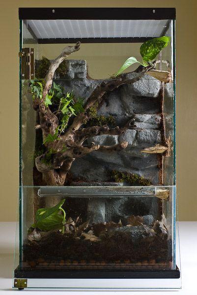 New Vivarium Pics Enclosed Keeping Amp Breeding Reptiles