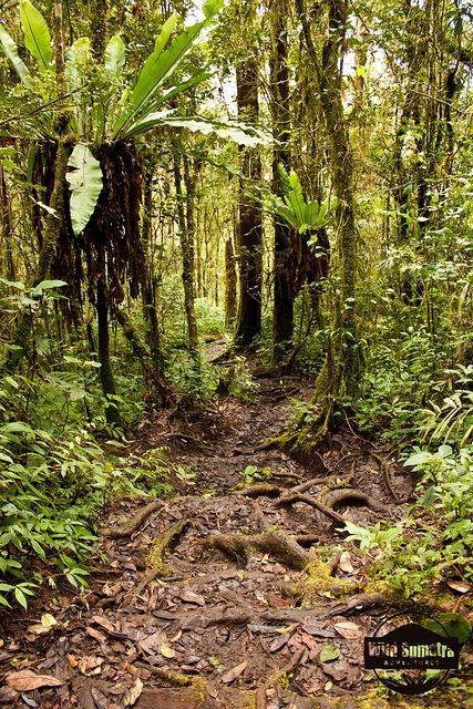 Jungle Path Nature, Landscape, Paths