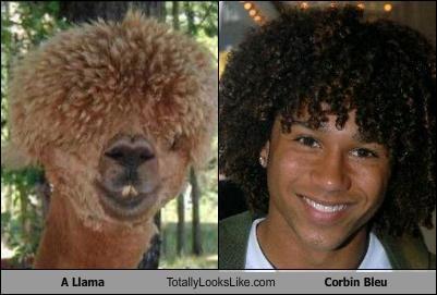 llama look-alike