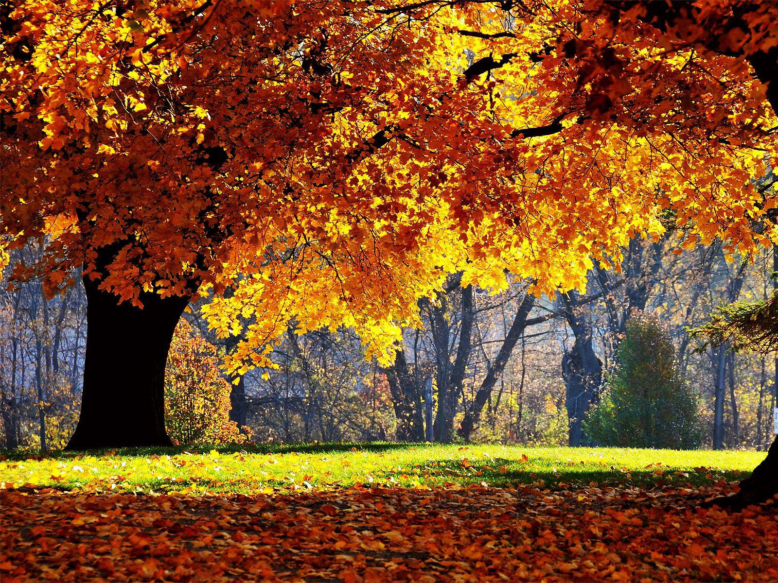 autumn - Cerca con Google