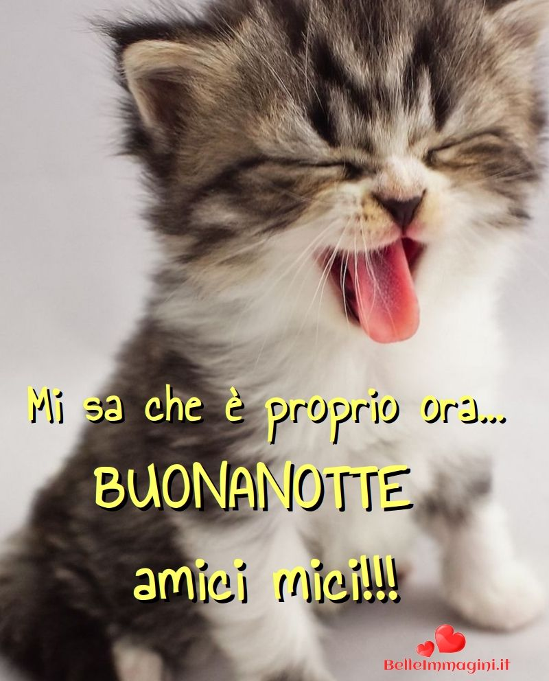 Immagini Buonanotte Belle Frasi Gatti Gattini Saludos Good Night