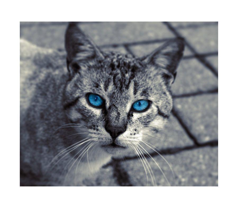 Warriors Den In 2020 Cat With Blue Eyes Grey Cats Warrior Cat