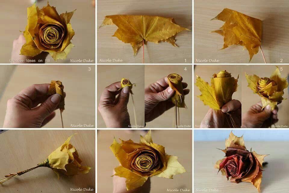 Autumn Flowers...