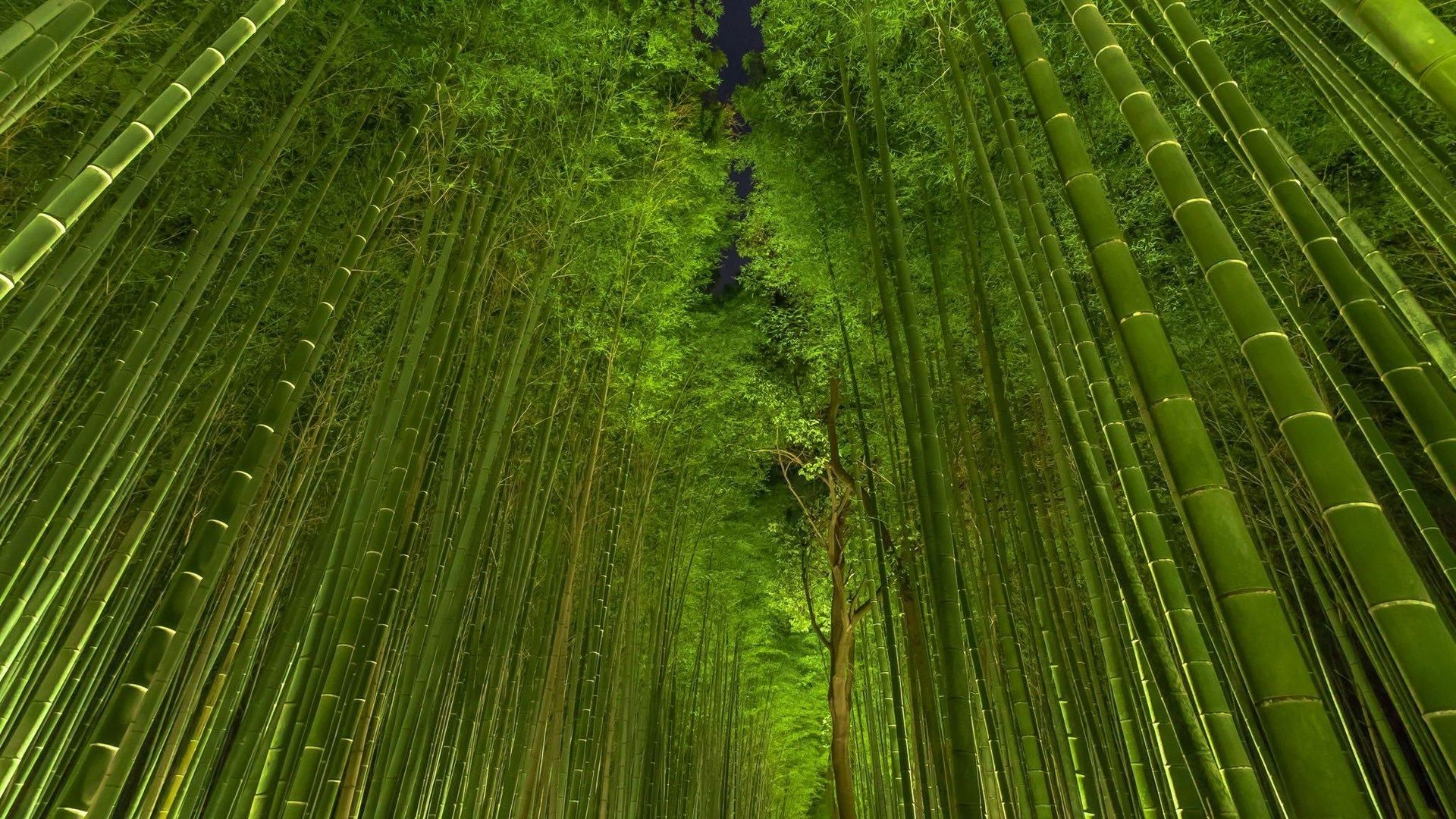 Green Bamboo Trees Wallpaper Images Hd Wallpapers Feng Shui