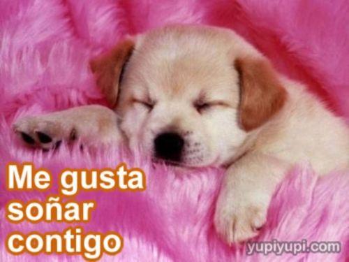 Perros Tiernos Cachorros Con Frases Chistosas Imagui Cumpleanos