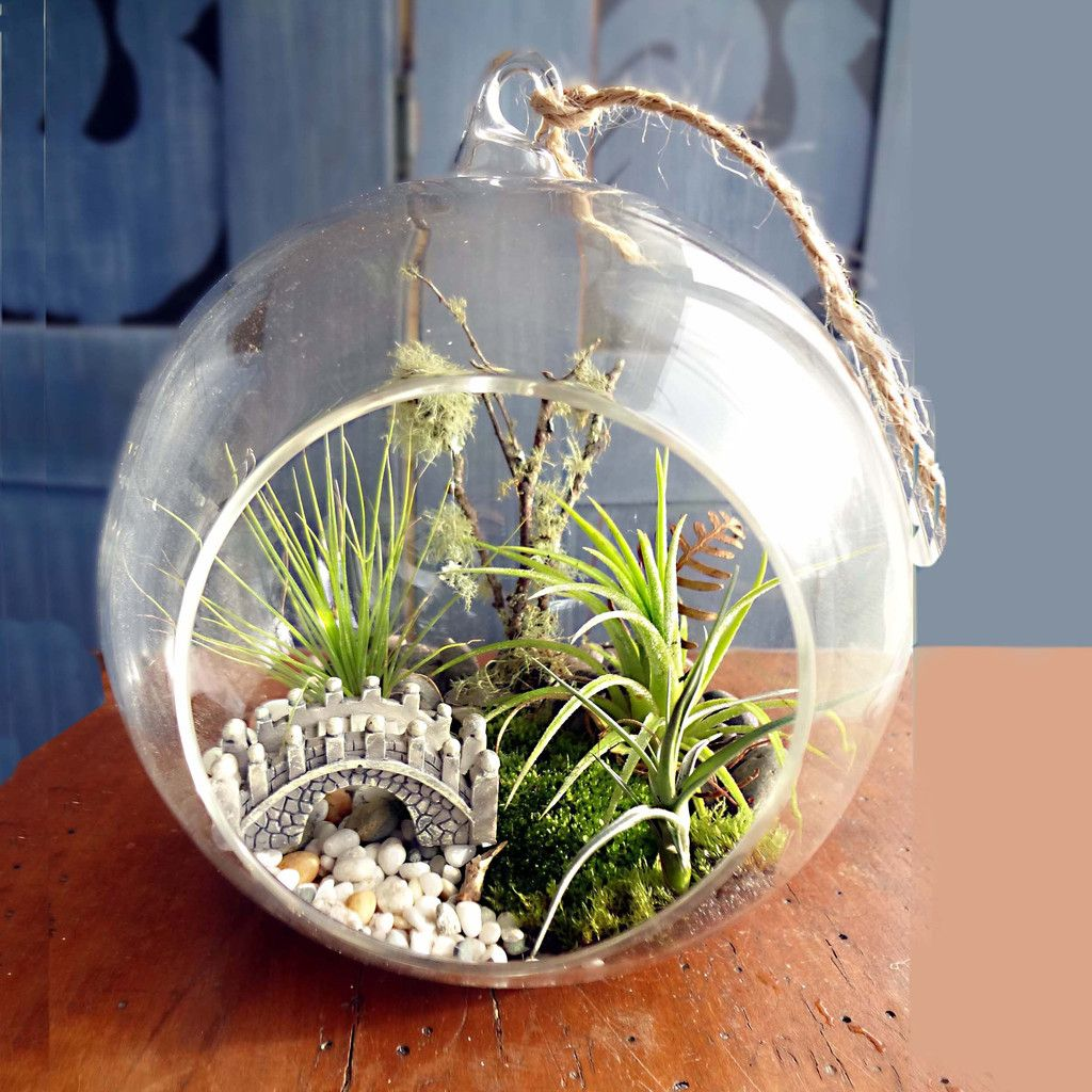 Ecobubbles Air Plant Terrariums Air plant terrarium