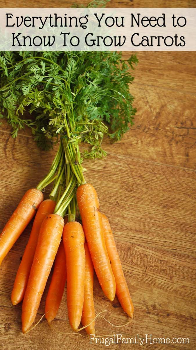 How to Grow Carrots, A Backyard Gardening Guide